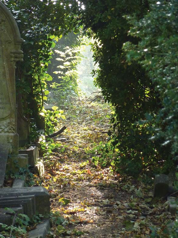 A sunlit path hidden between hedgerows at Arnos Vale