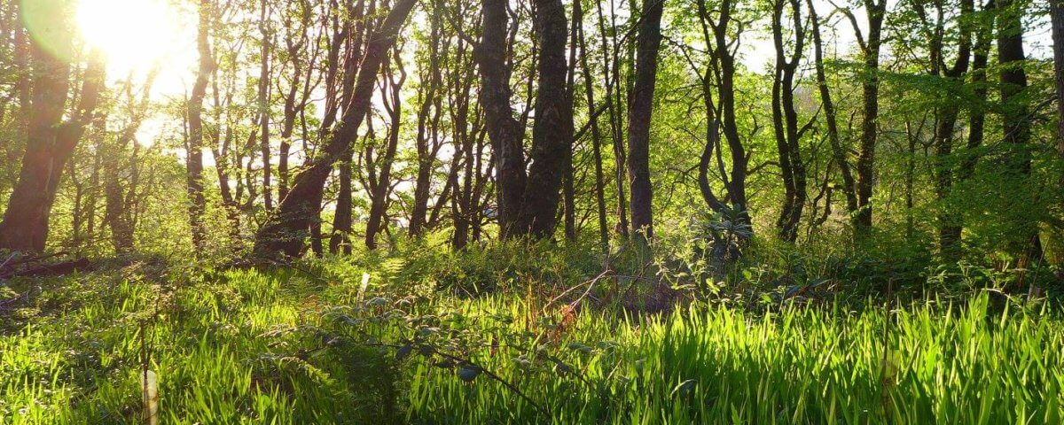 Calm woodland image