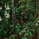 Amazonian Plants and Indigenous Pattern